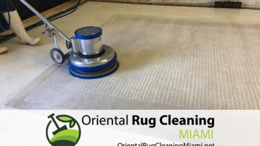 How To Find Professional Pet Odor Removal in Miami