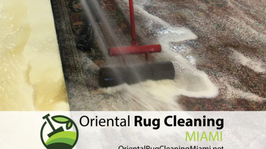 Fast and Effective Pet Odor Removal Service in Miami